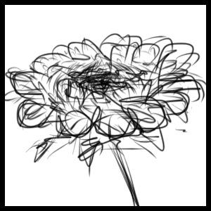 anemonă