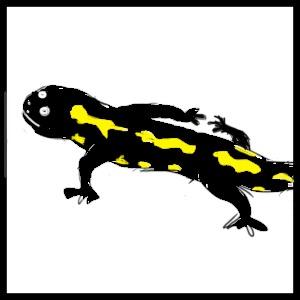 salamandră