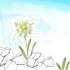 orofit